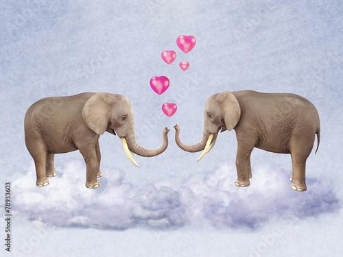 dwa-slonie-w-milosci