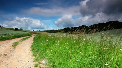 Summer meadow with green grass and dirt road
