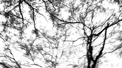 Panning of Trees