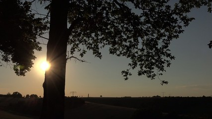 sunrise and silhouette of a tree