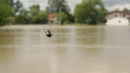 Spider moves and create cobweb in focus. Trackinf shot.