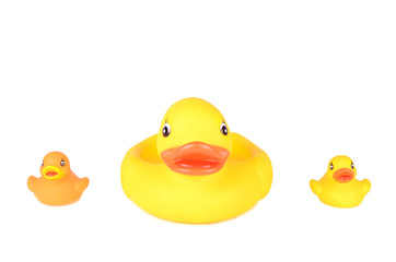 Plastic duck family isolated on white background