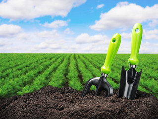 Garden tools on a background of the soil