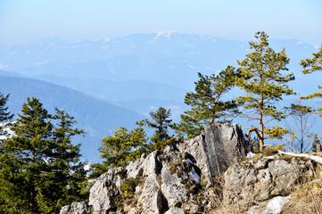 Alpenlandschaft mit Nadelbäumen im Winter