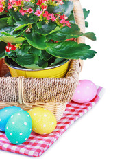 colorful easter eggs and spring flower isolated on white