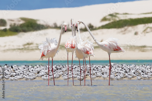 Foto op Aluminium Flamingo Flock of flamingos wading in shallow lagoon water