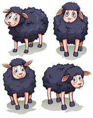 Four sheeps