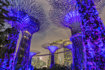 Supertree Grove at dawn in Singapore