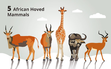 5 african hoved mammals collection