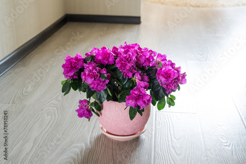 Pink azalea and rose stand on the floor in room
