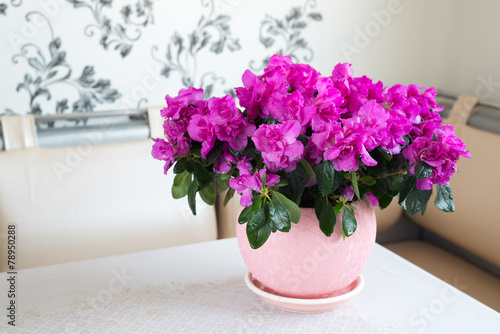 Tuinposter Azalea Pink azalea and rose stand on the floor in room