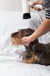 Bagno asciugatura e toelettatura cane bassotto