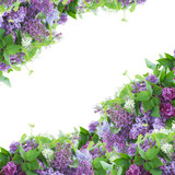 Frame of of Lilac flowers