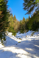 Landscape of Forest in Vosges mountain, France
