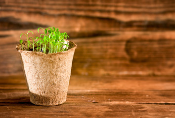 Potted seedlings growing in biodegradable peat moss pot