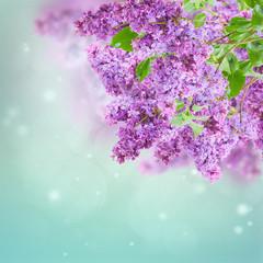 Bush of Lilac