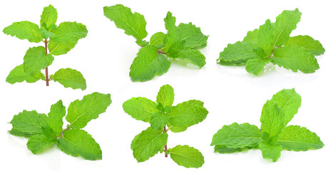 Mint leaf  on a white background
