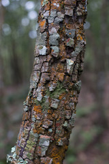 Close-up of Lichen and moss-covered bark