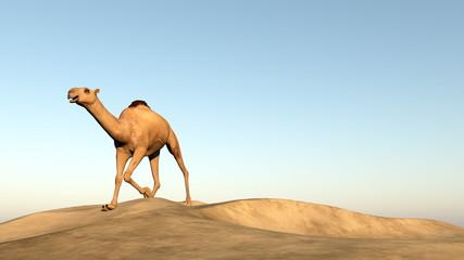 Camel running - 3D render