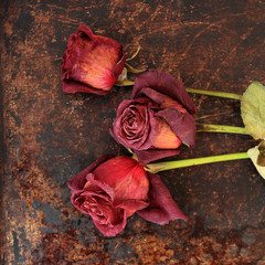 Dried roses on brown rustic background