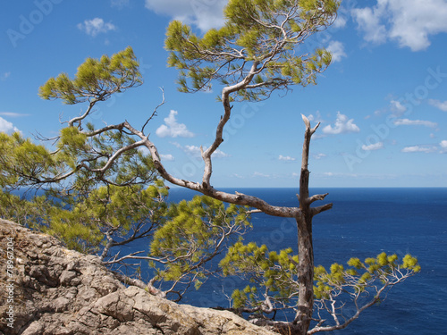 canvas print picture Baum am Meer