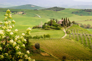 Tuscany, landscape and farmhouse in the hills of Val d'Orcia