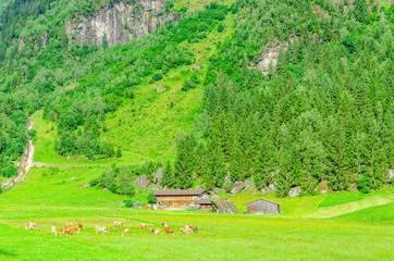 Green alpine meadows, Zillertal, Austria