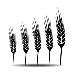 wheat vecter