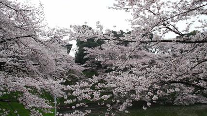 blossom, botanicals, vegetative
