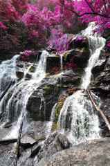 Waterfall with edited foliage hues to look like flowering trees