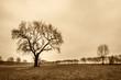 canvas print picture - nur ein Baum