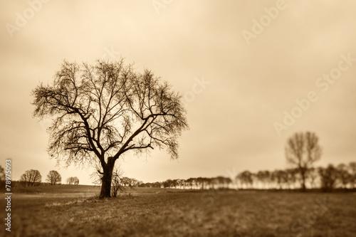 canvas print picture nur ein Baum