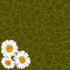 Green background from grass and flowers of camomile in corner