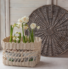 White daffodils in a basket