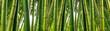 Leinwanddruck Bild - Sunlght peeks through dense bamboo