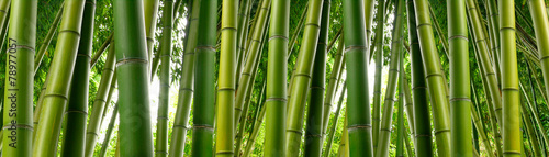 In de dag Bamboo Sunlght peeks through dense bamboo