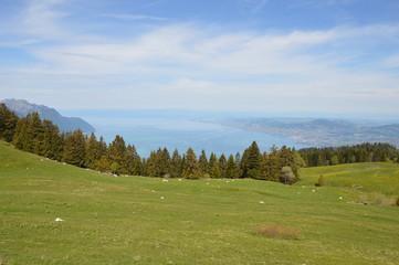 Paturages suisse