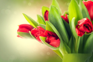 Spring flowers bunch. Beautiful red tulips bouquet