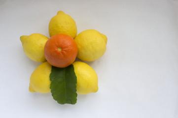 Limoni e Mandarino 1