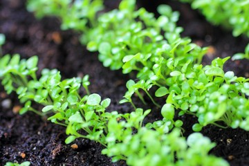 Growing Plants at Spring