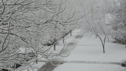 Pan from tree tops to sidewalk in a snowstorm