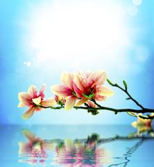 Spring flower magnolia background