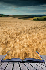 Stunning wheat field landscape under Summer stormy sunset sky co