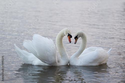 Foto op Plexiglas Zwaan Swans love