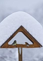 casetta uccelli neve cinciallegra