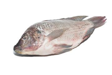 fresh tilapia fishes isolate on white