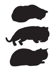 black silhouettes lying cats