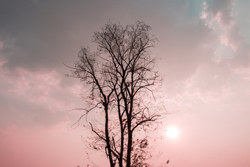 Silhouette of nature