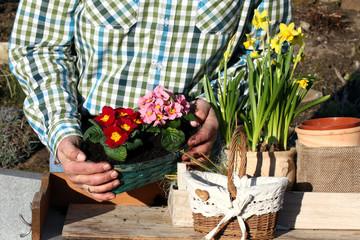 Gärtner an Pflanztisch mit Frühlingsblumen