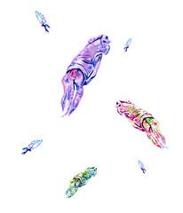 イカ - cuttlefish